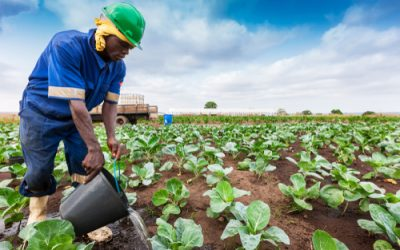 CABI: Hi-tech help for farming challenges